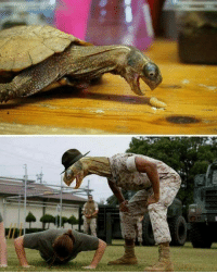 9gag, Memes, and Photoshop: I really can't say anything. Follow @9gag to laugh more. 9gag turtle photoshop