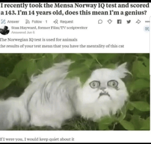 he was feline pretty good about himself: I recently took the Mensa Norway IQ test and scored  a 143. I'm 14 years old, does this mean I'm a genius?  Z Answer  a Follow - 1  +8 Request  c0o0  Stan Hayward, former Film/TV scriptwriter  Answered Jun 6  The Norwegian IQ test is used for animals  the results of your test mean that you have the mentality of this cat  IfI were you, I would keep quiet about it he was feline pretty good about himself