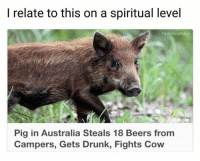 Drunk, Memes, and Australia: I relate to this on a spiritual level  FuckitimaRobot  Pig in Australia Steals 18 Beers from  Campers, Gets Drunk, Fights Cow the cow didn't check herself (rp @fuckitimarobot 👈👈👈)