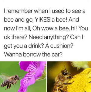 Dank, Love, and Wow: I remember when l used to see  bee and go, YIKES a bee! And  now I'm all, Oh wow a bee, hi! You  ok there? Need anything? Can I  get you a drink? A cushion?  Wanna borrow the car? I love bees