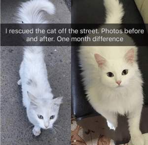 https://t.co/NIIDFATHRP: I rescued the cat off the street. Photos before  and after. One month difference https://t.co/NIIDFATHRP
