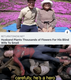Smell, Flowers, and Husband: i  RETURNTONOW.NET  Husband Plants Thousands of Flowers For His Blind  Wife To Smell  carefully, he's a hero) everyone liked that