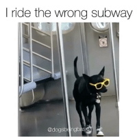 Memes, Subway, and 🤖: I ride the wrong subway  Cadogsbeingbas This is the coolest doggo the MTA has ever seen. Via @dogsbeingbasic