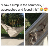 """HAMMOCKS ALWAYS SEEM COZY AF UNTIL I GET IN ONE AND COLLAPSE ON MYSELF LIKE A FOLDING CHAIR AND THEN I JUST WANT MY BED overratedAF 😐😂😂😂 (@1foxybitch): """"i saw a lump in the hammock, i  approached and found this  @DrSmashlove HAMMOCKS ALWAYS SEEM COZY AF UNTIL I GET IN ONE AND COLLAPSE ON MYSELF LIKE A FOLDING CHAIR AND THEN I JUST WANT MY BED overratedAF 😐😂😂😂 (@1foxybitch)"""