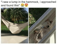"""Hammocking: """"i saw a lump in the hammock, i approached  and found this"""""""