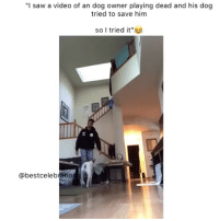 """I'm weak 😂😂😭: """"I saw a video of an dog owner playing dead and his dog  tried to save hinm  so I tried it""""  @bestcelebratio I'm weak 😂😂😭"""