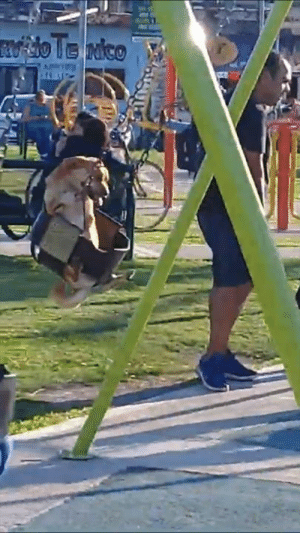 Saw, Happy, and Dog: 'I saw this happy dog at the playground and it absolutely made my day' 😂🐶  Credit: ViralHog
