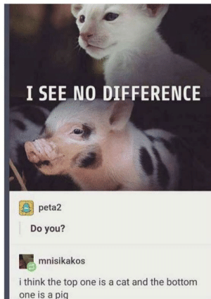 :thinking:: I SEE NO DIFFERENCE  peta2  Do you?  mnisikakos  i think the top one is a cat and the bottom  one is a pig :thinking: