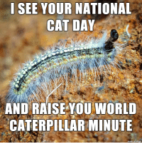 national cat day: I SEE VOUR NATIONAL  CAT DAY  AND RAISE YOU WORLD  CATERPILLAR MINUTE  made on imgur