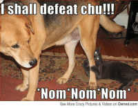 i shall defeat chu!!!  Nom Nom Nom  See More Crazy Pictures & Videos on Owned.com