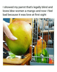 Bad, Bbw, and Love: I showed my parrot that's legally blind and  loves bbw women a mango and now feel  bad because it was love at first sight I've been following @some_bull_ish since my page was a month old. You should too 👉 @some_bull_ish