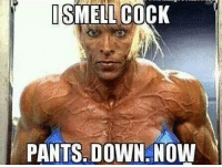 what now: I SMELL COCK  PANTS DOWN NOW