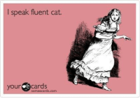How many of you have conversations with your cats?: I speak fluent cat.  your e cards  someecards. How many of you have conversations with your cats?