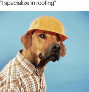 "Roofing, I Specialize in Roofing, and Specialize: ""I  specialize in roofing"
