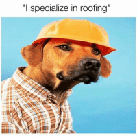 I Specialize In Roofing Another Dog Pun Because I M A Weak