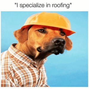 "Animals, Dogs, and Memes: ""I specialize in roofing"" Dog Memes Of The Day 32 Pics – Ep52 #animalmemes #dogmemes #memes #dogs - Lovely Animals World"
