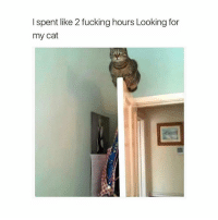 Girl, 2-Fucks, and Fucking Hours: I spent like 2 fucking hours Looking for  my cat How though..