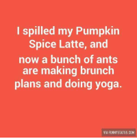 Here are some of our favorite memes about everyone's crazy love affair (OK ... obsession) with Pumpkin Spice Lattes. #PSL #PSLmeme #funnymemes #memes #pumpkinspice: I spilled my Pumpkin  Spice Latte, and  now a bunch of ants  are making brunch  plans and doing yoga  VIA FUNNYSTATUS COM Here are some of our favorite memes about everyone's crazy love affair (OK ... obsession) with Pumpkin Spice Lattes. #PSL #PSLmeme #funnymemes #memes #pumpkinspice