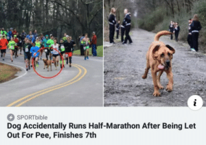 Let Out: i  SPORT bible  Dog Accidentally Runs Half-Marathon After Being Let  Out For Pee, Finishes 7th