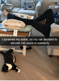 Her, Cat, and What: I sprained my ankle, so my cat decided to  elevate her paws in solidarity What a great cat!