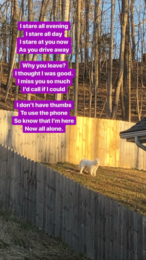 Being Alone, Phone, and Drive: I stare all evening  Istare all day  Istare at you now  As you drive away  Why you leave?  I thought I was good.  I miss you so much  I'd call if I could  I don't have thumbs  To use the phone  So know that I'm here  Now all alone Ballad of Lonely Doggo