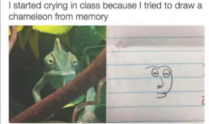 Crying, Funny, and Tumblr: I started crying in class because I tried to draw a  chameleon from memory