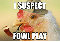 like this page for high quality memes of only free-ranged chickens: I SUSPECT  FOWL PLAY  ckmeme like this page for high quality memes of only free-ranged chickens