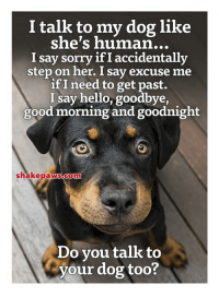 Hello, Memes, and Sorry: I talk to my dog like  she's human...  I say sorry if I accidentally  step on her. I say excuse me  if I need to get past.  I say hello, goodbye,  good morning and goodnight  shakepaws.com  Do you talk to  your dog too?