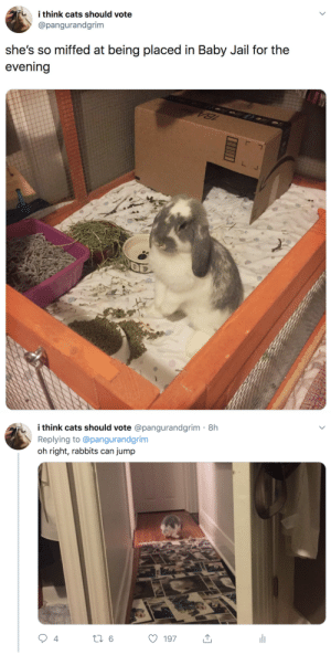 thelesbiandragon:this is so fucking hilarious, especially when you remember OP is an experienced rabbit owner.: i think cats should vote  @pangurandgrim  she's so miffed at being placed in Baby Jail for the  evening   i think cats should vote @pangurandgrim· 8h  Replying to @pangurandgrim  jump  oh right, rabbits can  li  27 6  197  4 thelesbiandragon:this is so fucking hilarious, especially when you remember OP is an experienced rabbit owner.