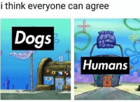 Dogs, Can, and Think: i think everyone can agree  Dogs  Humans