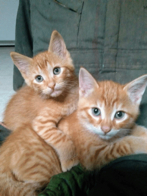 Kittens, Fred, and Friend: I think Fred and George Weasley would be fitting names for my friend's new kittens