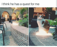Memes, Quest, and Ask: I think he has a quest for me Cat-sama, what do you ask of me? via /r/memes https://ift.tt/2Ov3Ij9