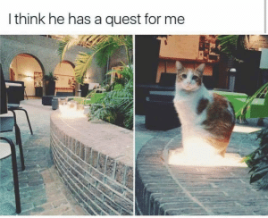 Quest, Ask, and Cat: I think he has a quest for me Cat-sama, what do you ask of me?