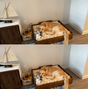 I think he likes the dog bed I made him. (Source): I think he likes the dog bed I made him. (Source)