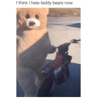 Memes, Bears, and Lowkey: I think I hate teddy bears now Lowkey want this costume via tt-raeganbrownn