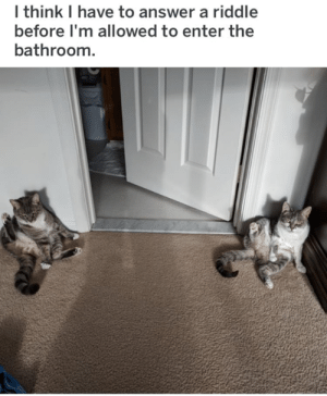 Riddle: I think I have to answer a riddle  before I'm allowed to enter the  bathroom