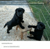 29 Hilarious Dog Memes and Pictures #memes #dogs #funny #humor #funnyanimals See the funniest dog memes and pictures here as doggos and puppers do what they always do and be adorable!: I think I interrupted a puppy business meeting  tastefullyoffensive  photo by EdwinMitchell12) 29 Hilarious Dog Memes and Pictures #memes #dogs #funny #humor #funnyanimals See the funniest dog memes and pictures here as doggos and puppers do what they always do and be adorable!