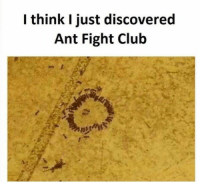 Dump 2: I think I just discovered  Ant Fight Club Dump 2