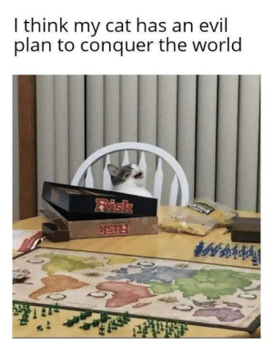 The Age of Darkness is upon us: I think my cat has an evil  plan to conquer the world  Risk  Risk The Age of Darkness is upon us