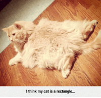 Tumblr, Blog, and Http: I think my cat is a rectangle.. srsfunny:  Geometric Cat