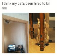 I sleep with one eye open now 👁️ (@superlazyrobot): I think my cat's been hired to kill  me I sleep with one eye open now 👁️ (@superlazyrobot)