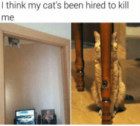 Cats, Memes, and Been: I think my cat's been hired to kill  me You've got to be kitten me right meow. Purrfect. 😼