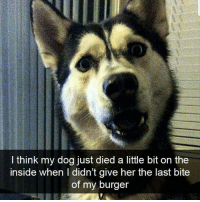 Love, Memes, and 🤖: I think my dog just died a little bit on thee  inside when I didn't give her the last bite  of my burger Follow @dietbetch I love her page ❤