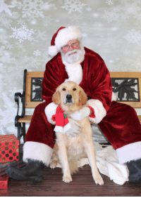 Dogs, Funny, and Santa
