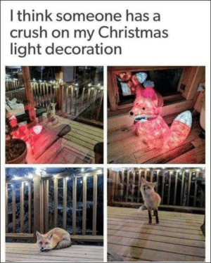 A Crush: I think someone has a  crush on my Christmas  light decoration