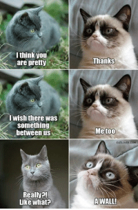 Grumpy Cat, I Think, and Comming: I think you  are pretty  I wish there was  something  between us  Really?!  Like what?  Thanks  Me too  EATLIVER COM  A WALL!