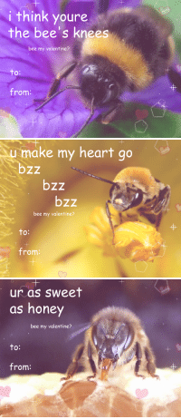 "Target, Tumblr, and Blog: i think youre  the bee's knees  bee my valentine?  to  O:  from:   1  make my heart go  bzz  bzz  bzz  bee my valentine?  to  O:  from:   1  1  ur as sweet  as honey  bee my valentine?  to:  from: sushidragon: here are some bee valentine cards, bc i was tired of just seeing only ""Bee Mine"""