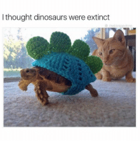 Dank, 🤖, and Extinction: I thought dinosaurs were extinct  theblessed one I guess not 😻