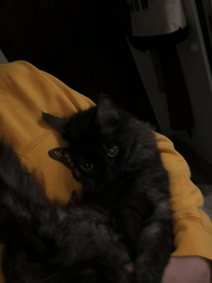 I thought i would share her name origin: we were in the car when we adopted her and were trying to think of a name. My mom suggested it be something we all like and my dumbass said granola. Everyone said no so I said, Granny. AGAIN everyone said no until I said Nola and boom, now here is Nola.: I thought i would share her name origin: we were in the car when we adopted her and were trying to think of a name. My mom suggested it be something we all like and my dumbass said granola. Everyone said no so I said, Granny. AGAIN everyone said no until I said Nola and boom, now here is Nola.