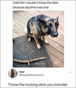 Fucking, Memes, and Monster: I told him I wouldn't throw the stick  because playtime was over  Bestmemes  mav  @meadhbhoconnor  Throw the fucking stick you monster 100 Of Today's Freshest Pics And Memes